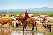 El abrevadero-Pastoreo a caballo en la estepa