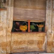 Havana# 0019