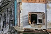 Havana# 0037